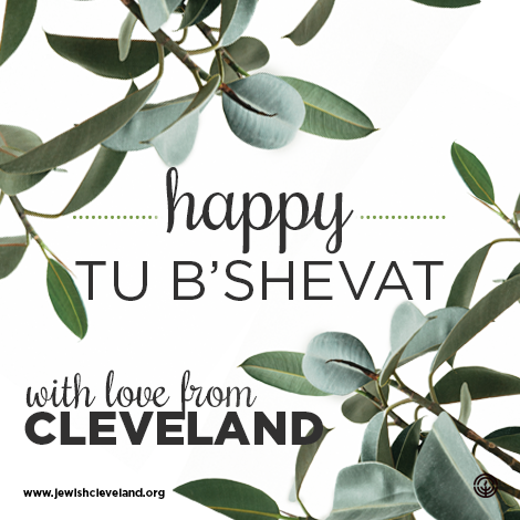 Three Ways You Can Celebrate Tu B'Shevat